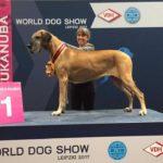 Ini Dia Kompetisi Anjing Internasional yang Paling Penting