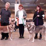 Kompetisi Anjing Internasional di Serbia