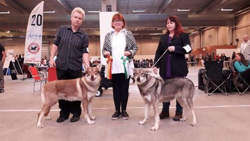 ompetisi Anjing Internasional di Serbia