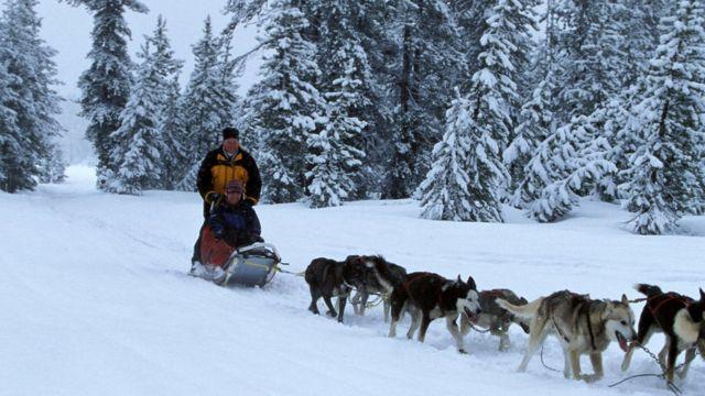 Lomba Anjing 2014 Iditarod, Siberia dari Nikolai ke Ruby