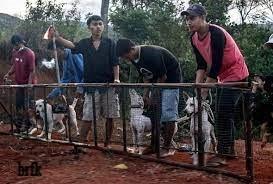 10 Olaraga Melatih anjing Untuk Persiapan Perlombaan International