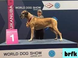 Acara Anjing Nasional dan Internsinal Dunia Terbaik