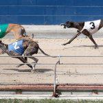 Balap Anjing Greyhound Semakin Berkurang